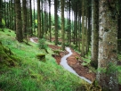 Slieve Bloom Mountain Bike Trail Centre Update
